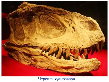 Картинки по запросу Янхуанозавр